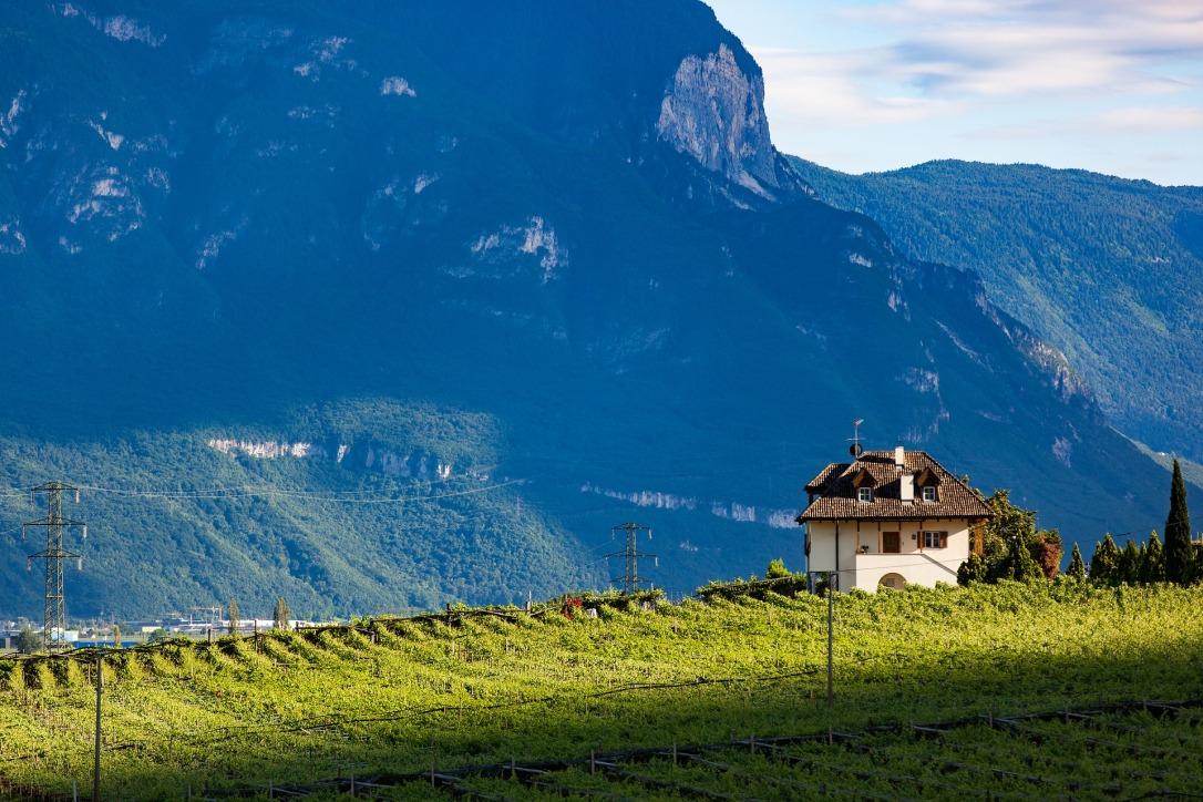 vineyard-1694676_1920